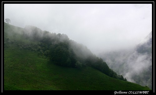 http://maurienne.nature.free.fr/blog/images/verdure/brume.jpg